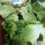 レタス収穫と不思議
